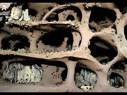 Термиты и их постройки Как устроен термитник