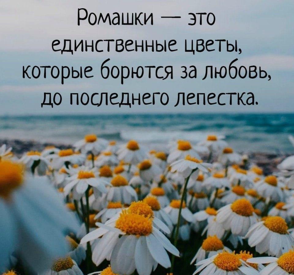 картинка цветок цитатой постеры изображением