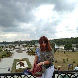 Daria, 20 лет, Дмитров