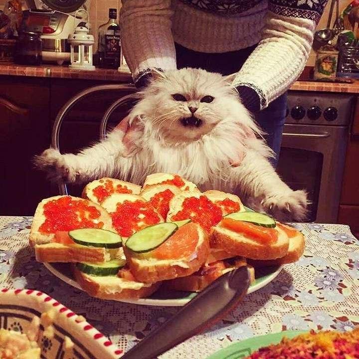поняла, доброе утро картинки с юмором и едой честь