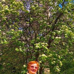 Nina, 66 лет, Трускавец
