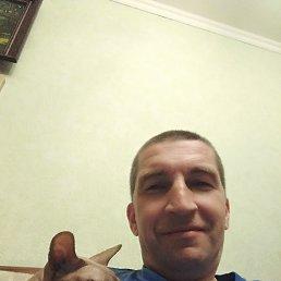 Алексей, 43 года, Тула