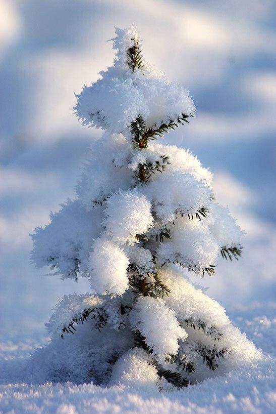 В лесу родилась ёлочка —. вот там пусть и растёт.!