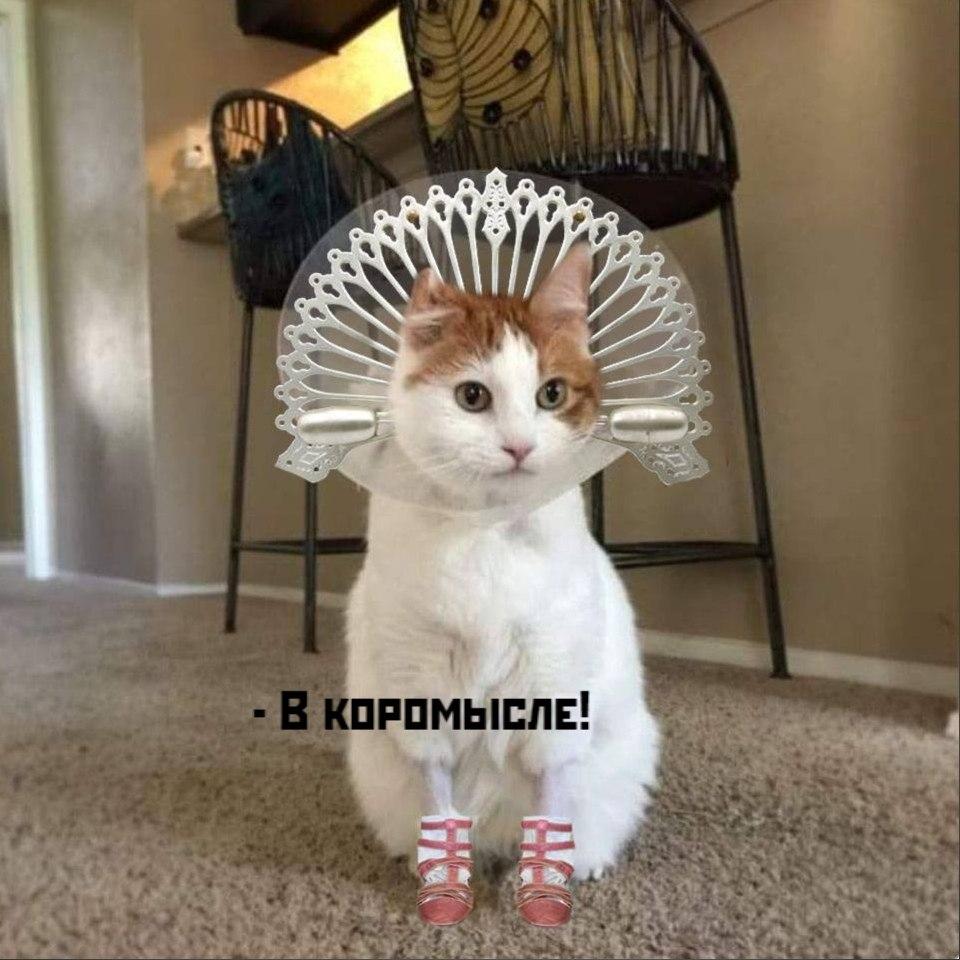 Без кота и жизнь не та - 15 октября 2020 в 18:59 - 4