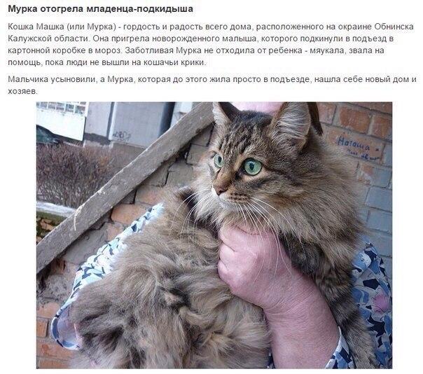Коты Герои!спасшие человеческие жизни! - 2