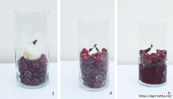 Выращивание тюльпанов в прозрачной вазе.Понадобятся низкорослые сорта. Перед тем, как высаживать ... - 5