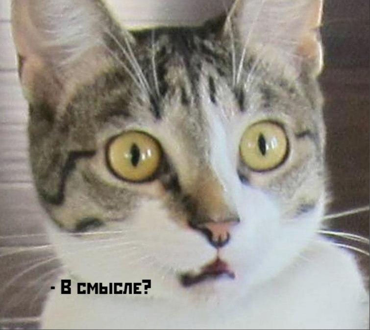 Без кота и жизнь не та - 15 октября 2020 в 18:59 - 3