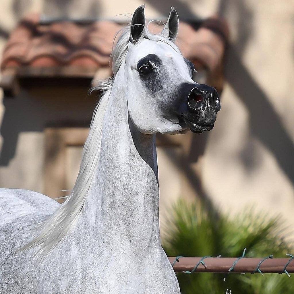 Лошади - это мой мир! - 1 февраля 2021 в 11:56