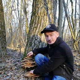 Артём, 37 лет, Сумы